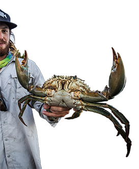 Mudcrab - Cannon Charters